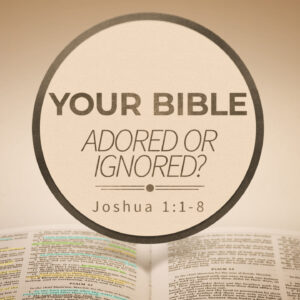 Your Bible Adored or Ignored